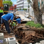 Tree Moving At City Hall Parking Lot Bermuda, June 11 2016-16