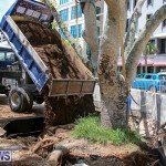 Tree Moving At City Hall Parking Lot Bermuda, June 11 2016-18