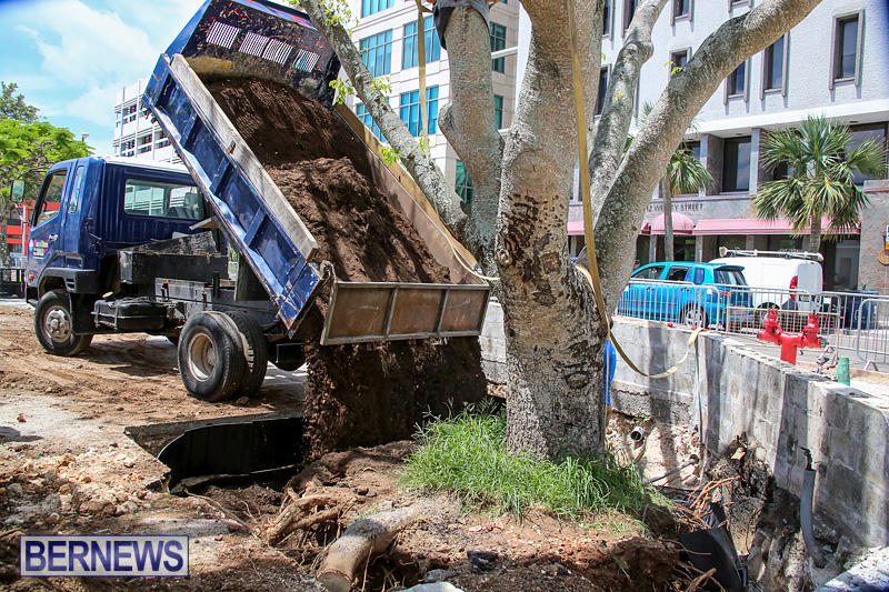 Tree-Moving-At-City-Hall-Parking-Lot-Bermuda-June-11-2016-18