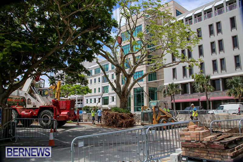 Tree-Moving-At-City-Hall-Parking-Lot-Bermuda-June-11-2016-2