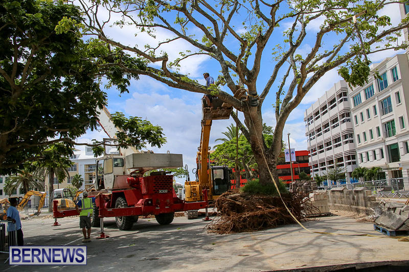 Tree-Moving-At-City-Hall-Parking-Lot-Bermuda-June-11-2016-5