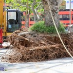 Tree Moving At City Hall Parking Lot Bermuda, June 11 2016-6