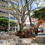Tree Moving At City Hall Parking Lot Bermuda, June 11 2016-9