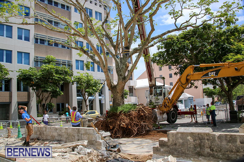 Tree-Moving-At-City-Hall-Parking-Lot-Bermuda-June-11-2016-9
