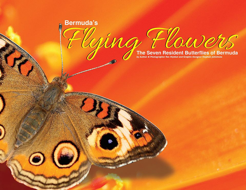 Bermuda's Flying Flowers July 2016