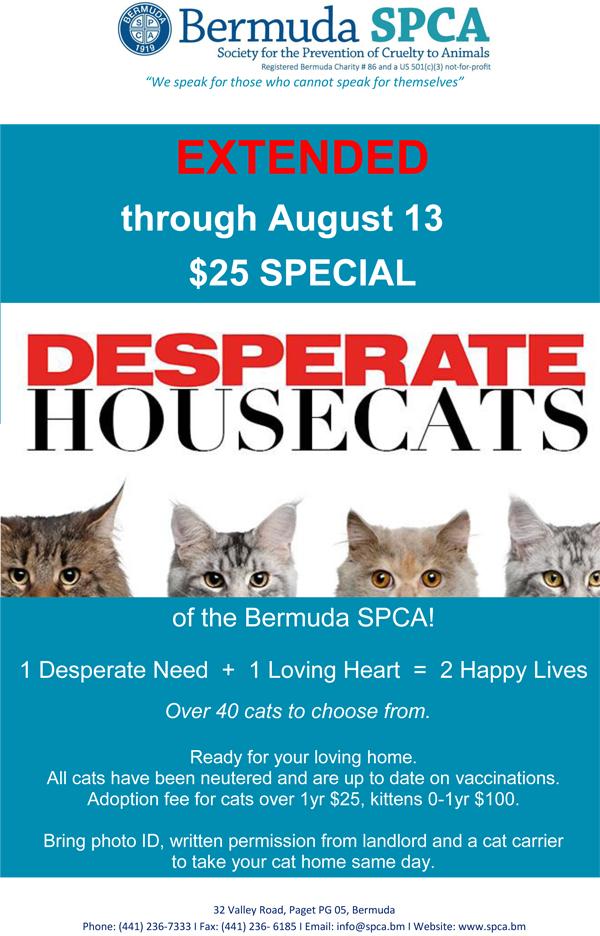 Desparate Housecats Aug 2016