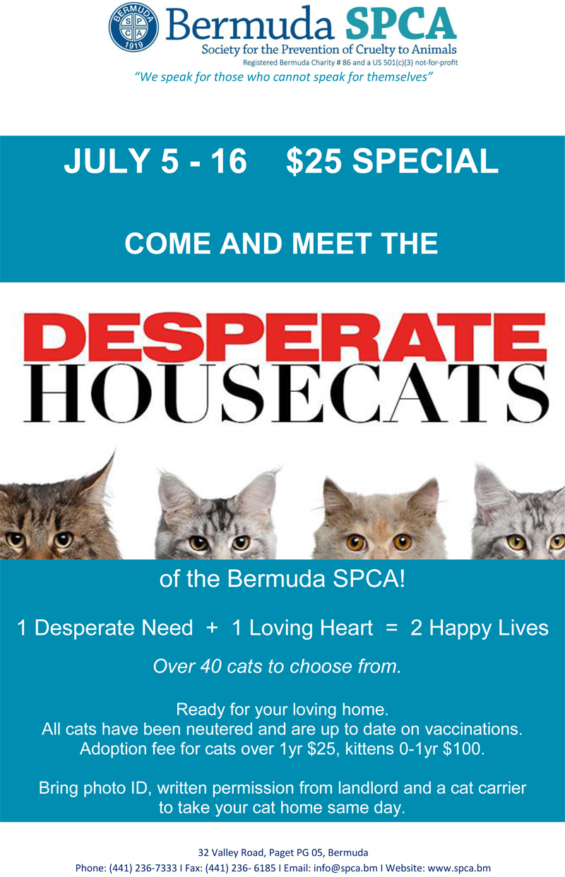 Desparate Housecats Bermuda July 2016