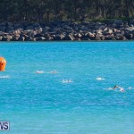Bermuda National Open Water Championships, September 25 2016-26