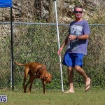 Bermuda Kennel Club Dog Show, October 23 2016-101