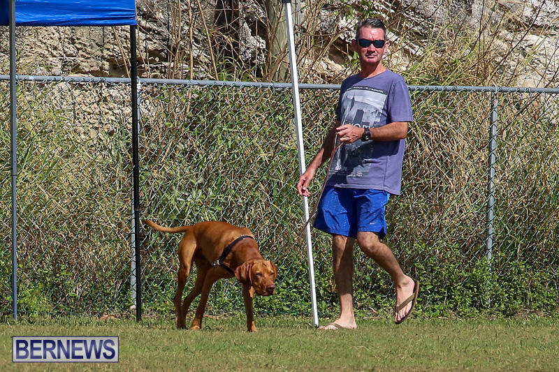 Bermuda-Kennel-Club-Dog-Show-October-23-2016-101