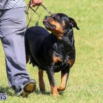 Bermuda Kennel Club Dog Show, October 23 2016-103