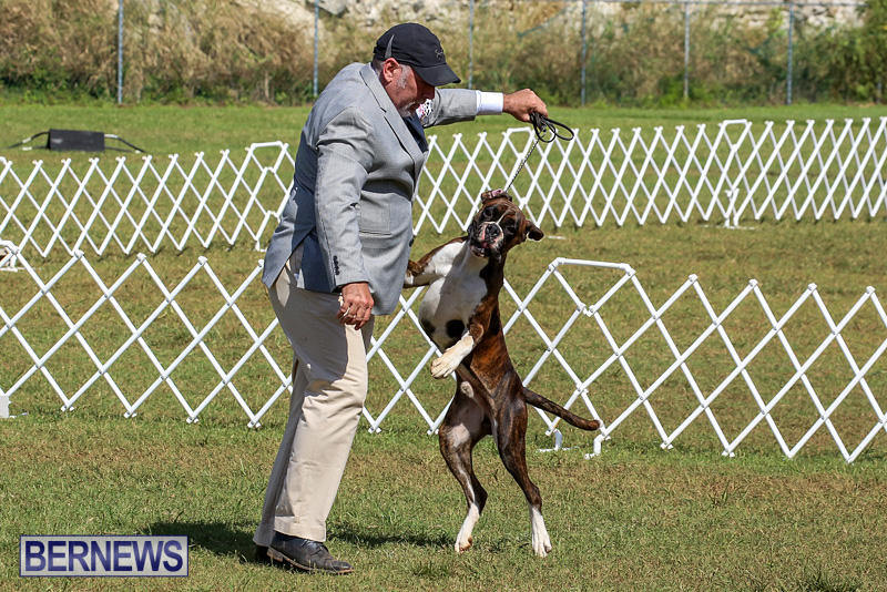 Bermuda-Kennel-Club-Dog-Show-October-23-2016-108