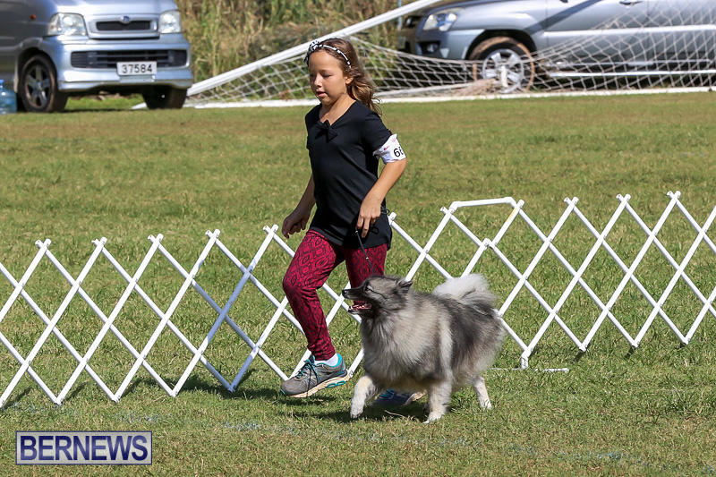 Bermuda-Kennel-Club-Dog-Show-October-23-2016-11