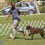 Bermuda Kennel Club Dog Show, October 23 2016-118