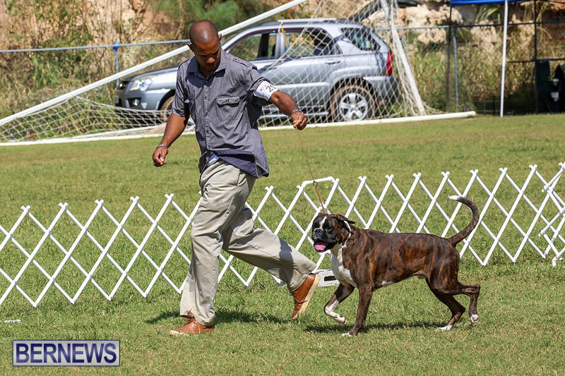 Bermuda-Kennel-Club-Dog-Show-October-23-2016-118