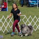 Bermuda Kennel Club Dog Show, October 23 2016-12
