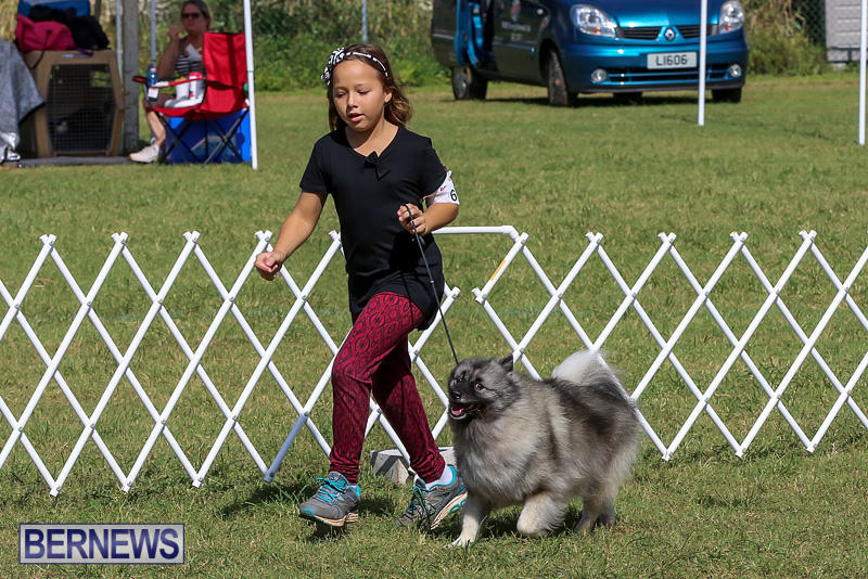 Bermuda-Kennel-Club-Dog-Show-October-23-2016-12
