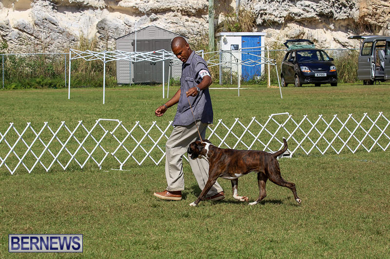Bermuda-Kennel-Club-Dog-Show-October-23-2016-121