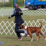 Bermuda Kennel Club Dog Show, October 23 2016-122