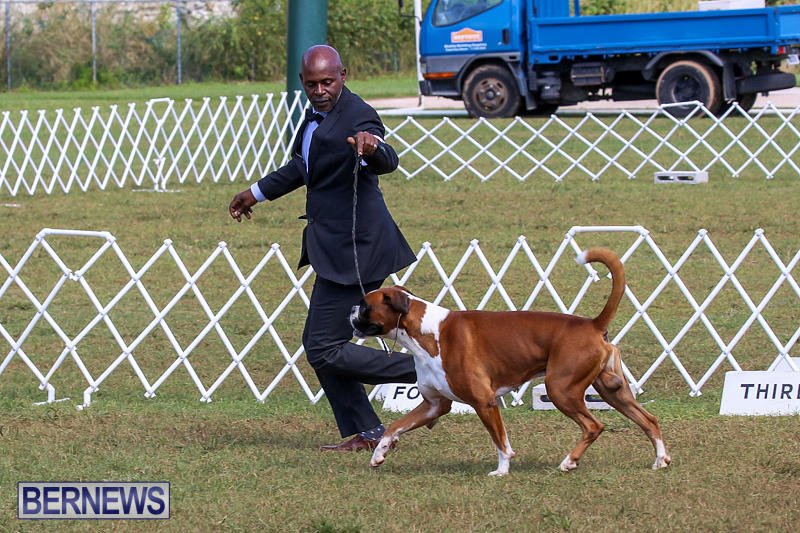 Bermuda-Kennel-Club-Dog-Show-October-23-2016-122