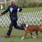 Bermuda Kennel Club Dog Show, October 23 2016-123
