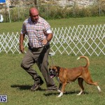 Bermuda Kennel Club Dog Show, October 23 2016-125