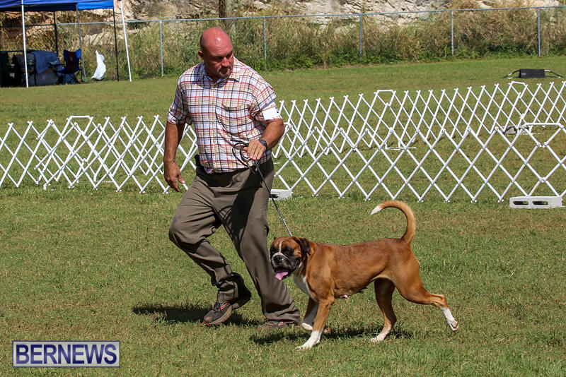 Bermuda-Kennel-Club-Dog-Show-October-23-2016-125