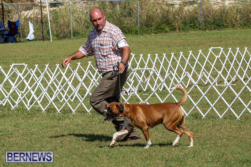 Bermuda-Kennel-Club-Dog-Show-October-23-2016-127
