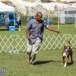 Bermuda Kennel Club Dog Show, October 23 2016-131