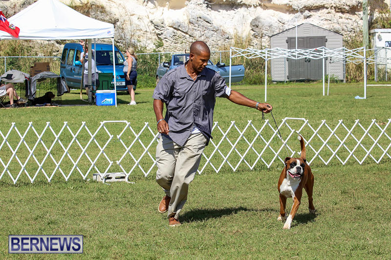 Bermuda-Kennel-Club-Dog-Show-October-23-2016-131