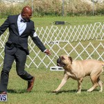 Bermuda Kennel Club Dog Show, October 23 2016-133