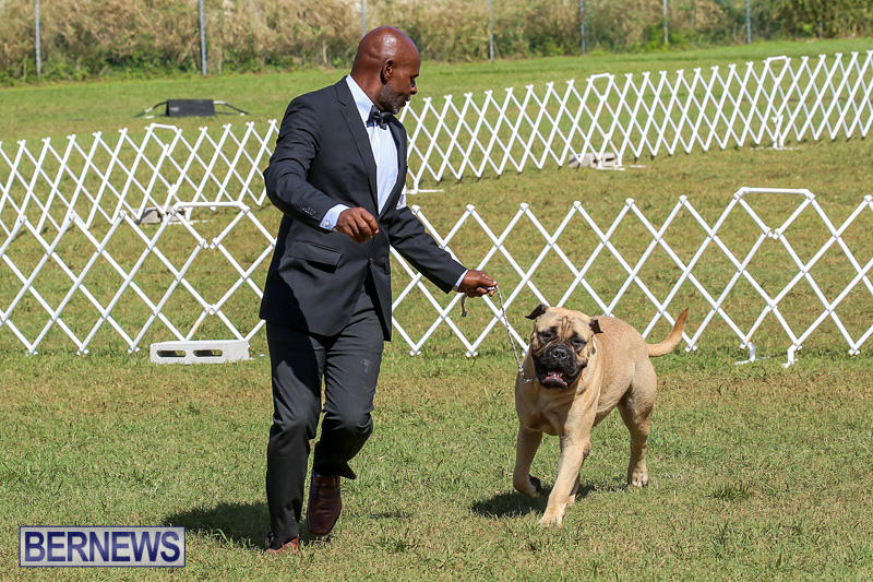 Bermuda-Kennel-Club-Dog-Show-October-23-2016-137