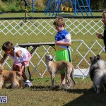 Bermuda Kennel Club Dog Show, October 23 2016-14