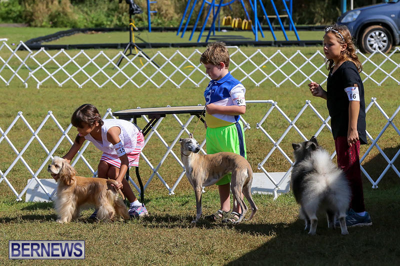 Bermuda-Kennel-Club-Dog-Show-October-23-2016-14