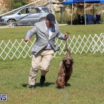 Bermuda Kennel Club Dog Show, October 23 2016-140