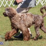 Bermuda Kennel Club Dog Show, October 23 2016-141