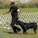 Bermuda Kennel Club Dog Show, October 23 2016-143