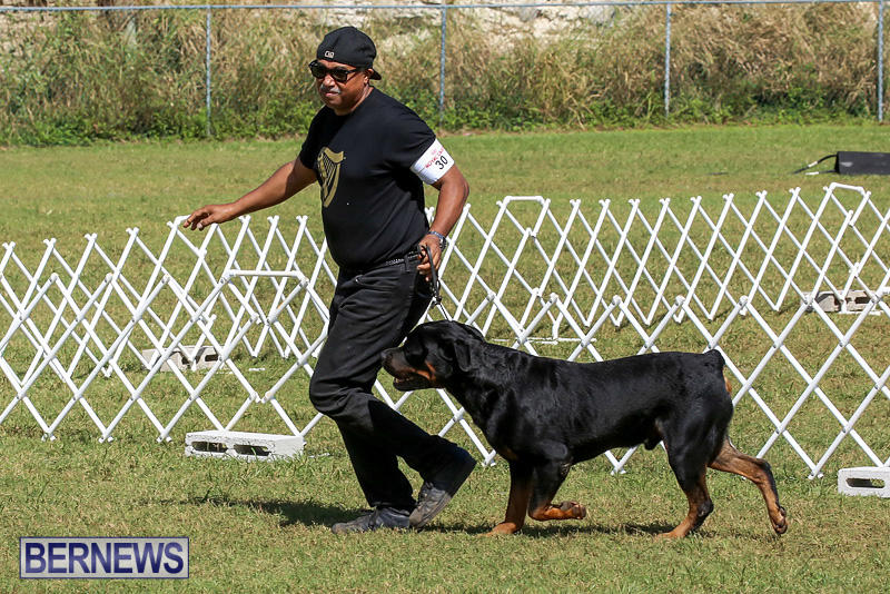 Bermuda-Kennel-Club-Dog-Show-October-23-2016-143