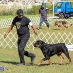 Bermuda Kennel Club Dog Show, October 23 2016-145