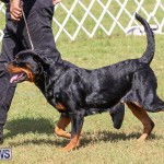 Bermuda Kennel Club Dog Show, October 23 2016-149