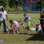 Bermuda Kennel Club Dog Show, October 23 2016-15
