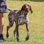 Bermuda Kennel Club Dog Show, October 23 2016-150