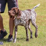 Bermuda Kennel Club Dog Show, October 23 2016-151