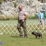 Bermuda Kennel Club Dog Show, October 23 2016-153