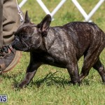 Bermuda Kennel Club Dog Show, October 23 2016-154
