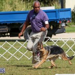 Bermuda Kennel Club Dog Show, October 23 2016-159