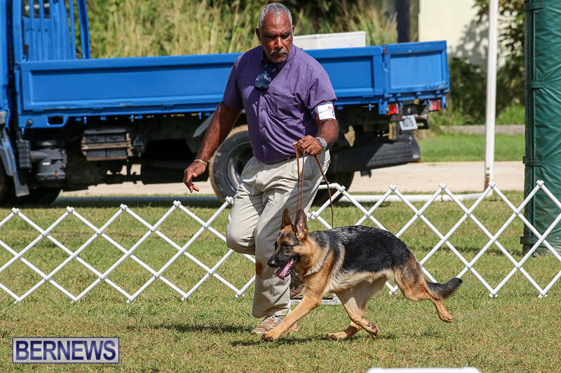 Bermuda-Kennel-Club-Dog-Show-October-23-2016-159