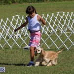 Bermuda Kennel Club Dog Show, October 23 2016-16