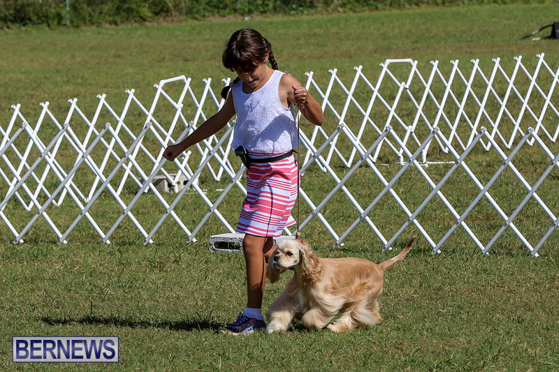 Bermuda-Kennel-Club-Dog-Show-October-23-2016-16