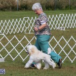 Bermuda Kennel Club Dog Show, October 23 2016-160